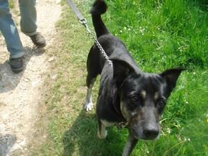 mini-chiens-mai2010-0051