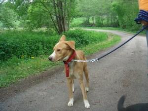mini-chiens-mai2010-025