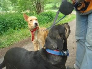 mini-chiens-mai2010-028