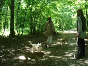 mini-chien-9-aout-2010-009