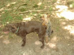 mini-chien-9-aout-2010-015