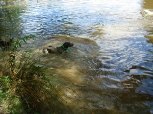 mini-chien-9-aout-2010-033