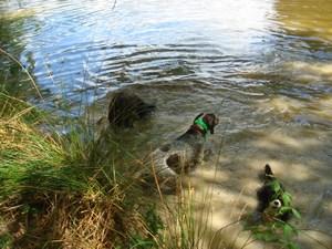 mini-chien-9-aout-2010-049