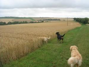 Roxy dans le blé!