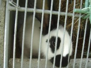Le lapin vu par Iro