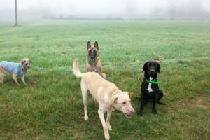 Rotsy, Cooper et Djinn