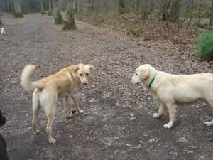 Roxy et Gus