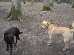 Roxy et Bounty
