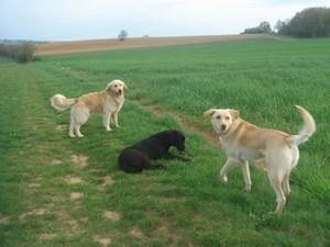 Sam, Djinn et Rotsy