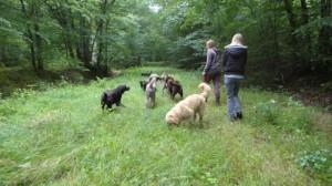tous en forêt sous l'oeil vigilant de Lucie et Eugénie