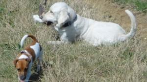 Nina et Fargo